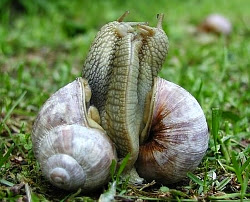 snails%2Bmaking%2Bout.jpg