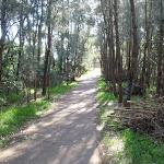 heading through the trees to the end of bridge street (77515)