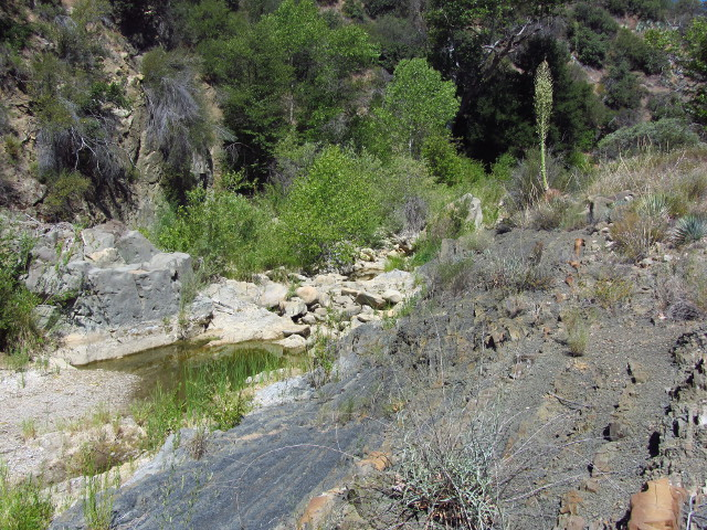 a few pools along the otherwise dry stream