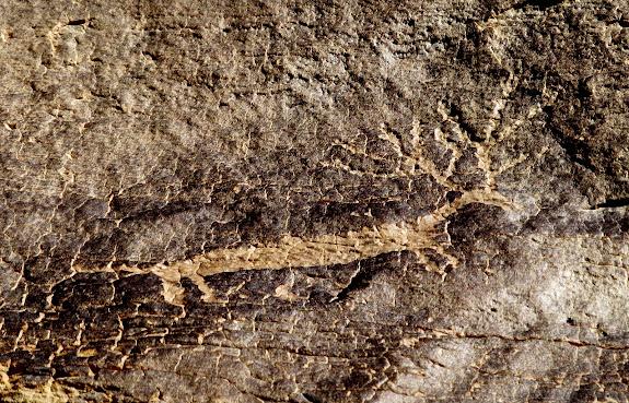Deer petroglyph