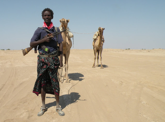 An Afar with his camels