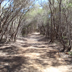 Track south of Hobart Beach camping area (105196)