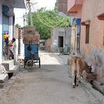 Petite rue de Tughlakabad village, Delhi