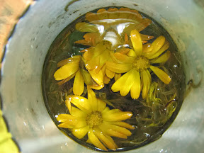 Körömvirág kivonat, krém házilag - Egészséges életmódszerek