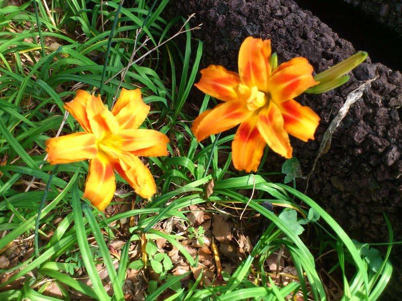 orange flowers in Quinta das Cruzes museum