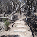 Stairs on Kangarutha Track (103900)