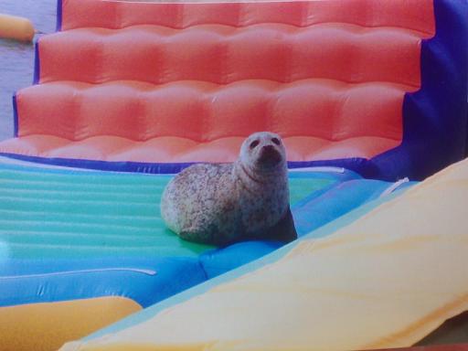 A foca pernoitava nos insufláveis do parque de recreio em plena baía