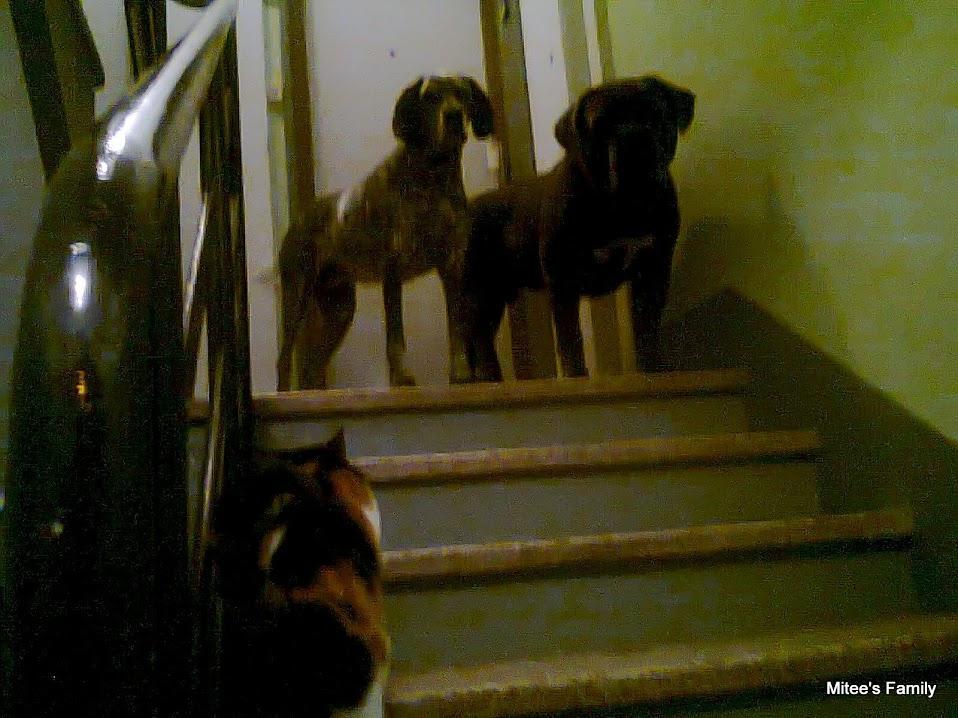 Cohabitation chien et chats - Page 10 Photo0339