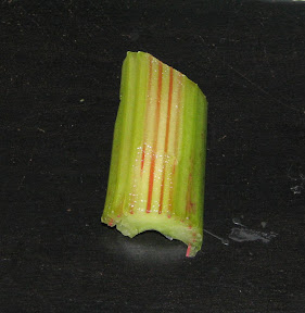 Cut the top layer of celery to observe the Capillary tubes