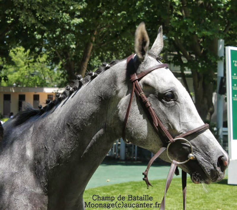 Photos Auteuil le 21-06-2014 IMG_2152