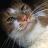 Alice Gill avatar image