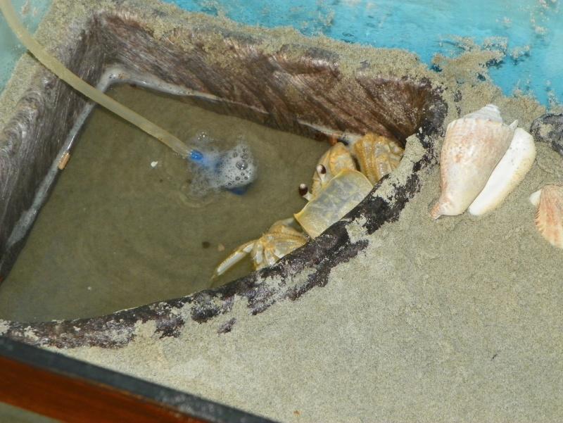 Pinchey, my sand crab 102_0216