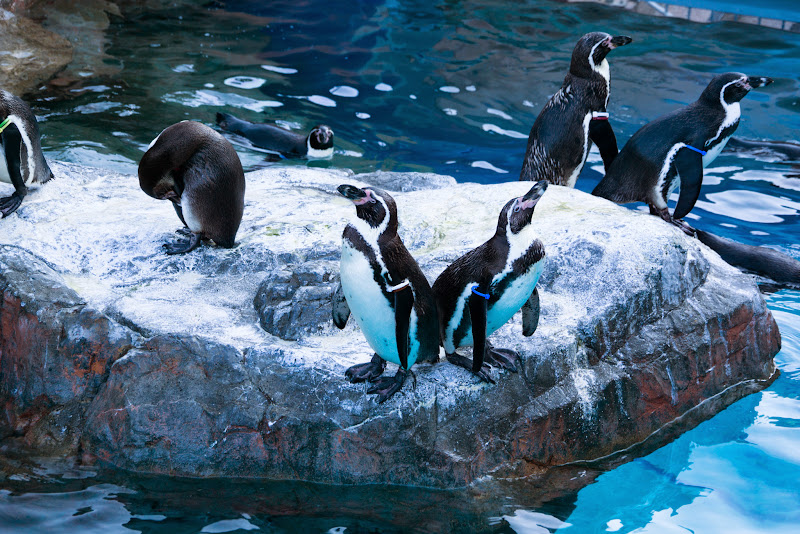 アクアワールド大洗水族館 写真17