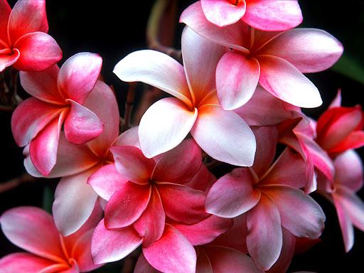 Desktop_flower_picture.jpg