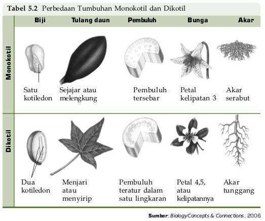 Tumbuhan biji tertutup (Angiospermae) - Klasifikasi, Sifat ...
