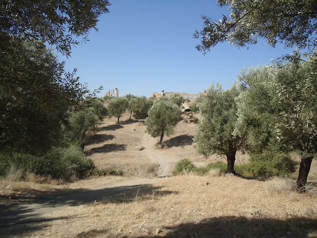 Marrocos 2011  - Página 2 DSC03685