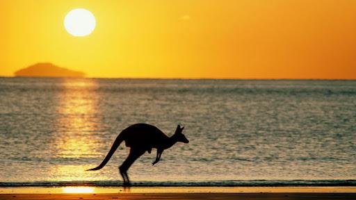 Taking Joey Home, Australia.jpg