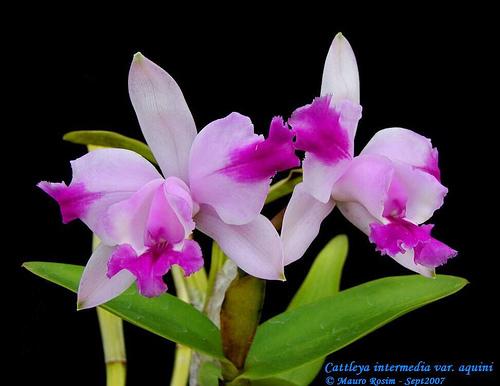 Растения из Тюмени. Краткий обзор - Страница 2 1308335238_833724ab1d
