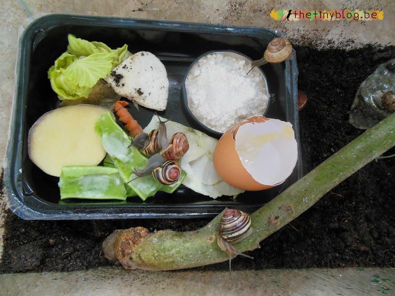 Snails Terrarium