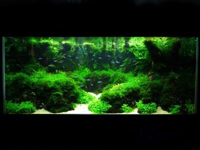 Relax potion segarkan ruangan anda dengan aquarium aquascaping - Gambar aquascape ...