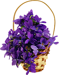 sweet violets in a basket