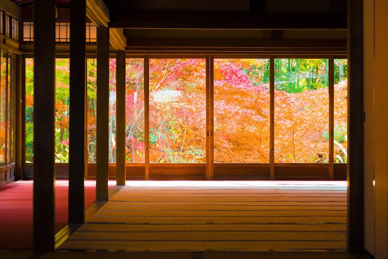 京都 天授庵 紅葉 写真4