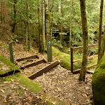 Timber steps and bridge near the Moss Wall in the Watagans (322715)