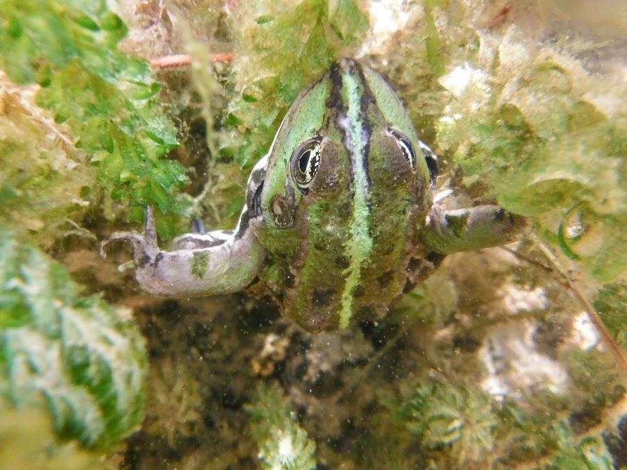 Ce que voient les grenouilles ! DSCF2025