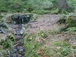 Wasser fließt aus vielen Quellen direkt am Weg ...