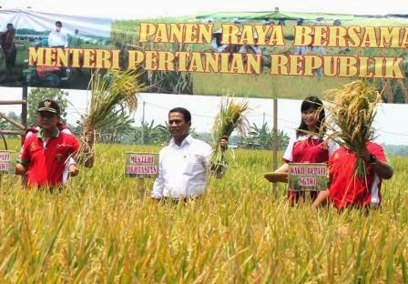 Tentang menteri paertanian gelar Panen raya di kecamatan Geneng Ngawi
