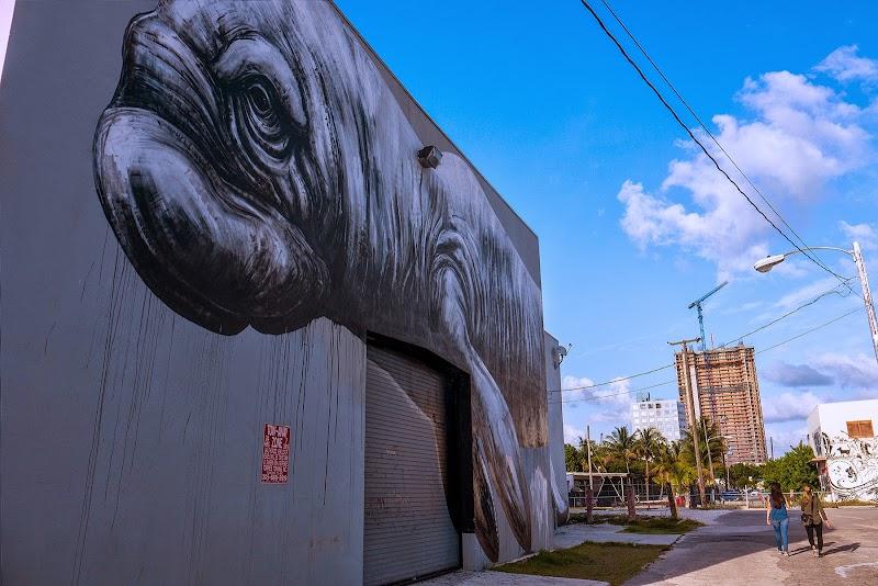 Street Artist ROA