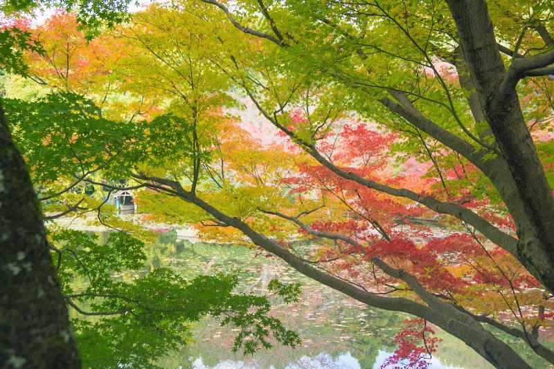 京都 紅葉 龍安寺 写真5
