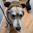 Mellow Yelloh avatar image