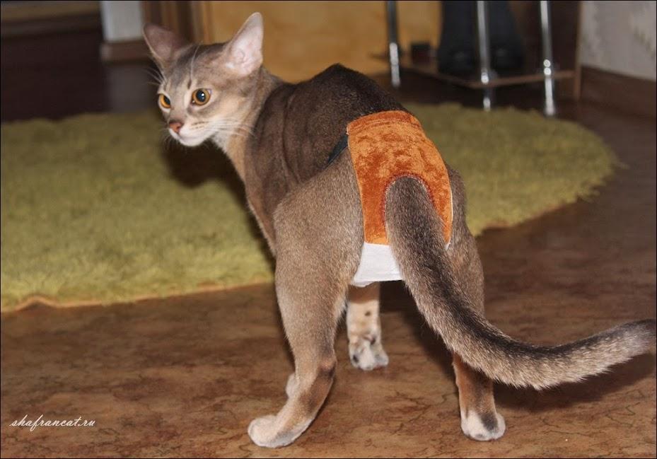 трусы для кота