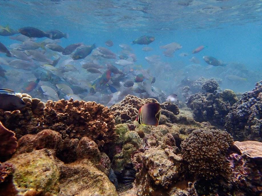 Miniloc Island Resort reef, Palawan, Philippines.