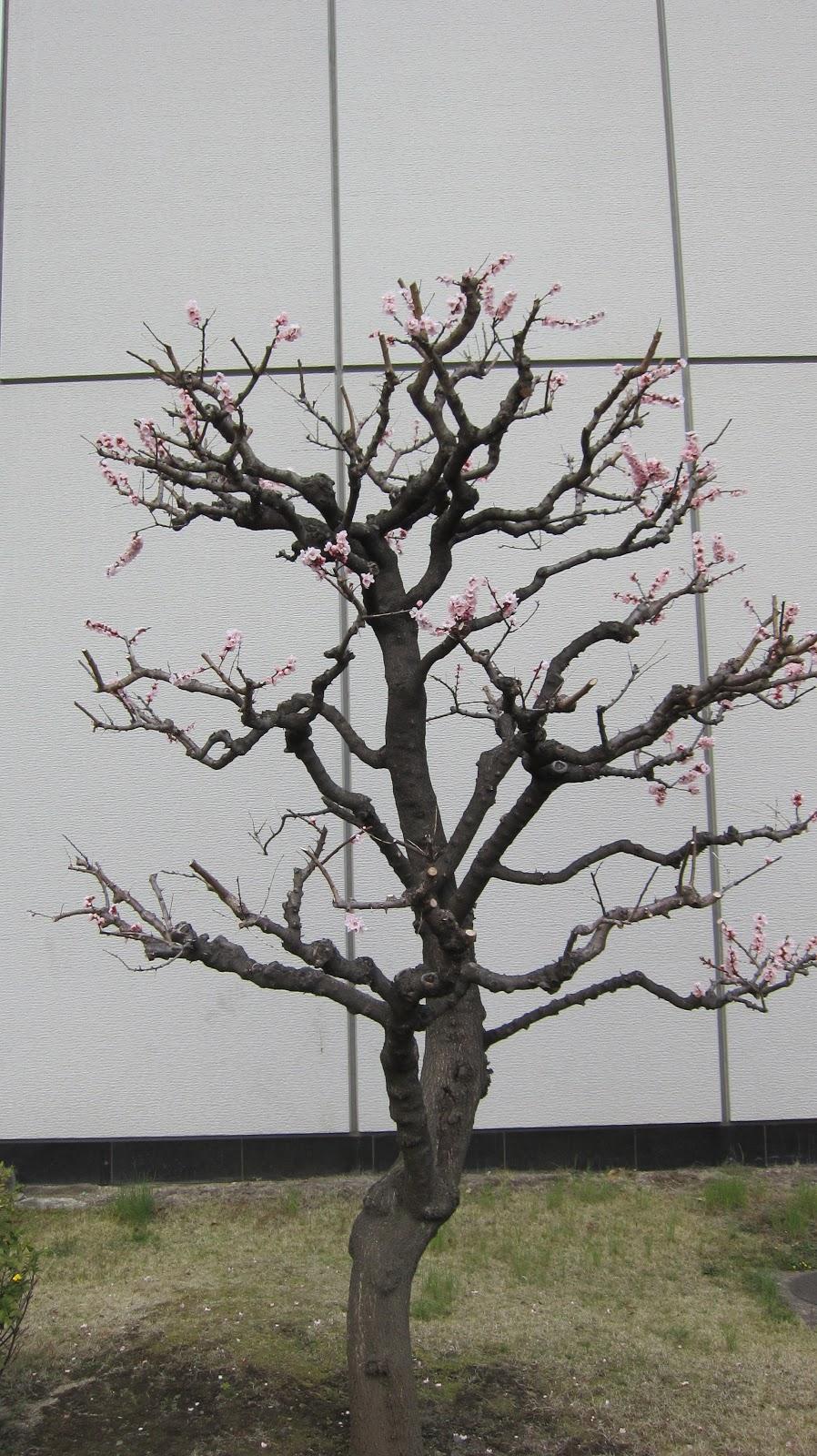 närliggande japanesse sex