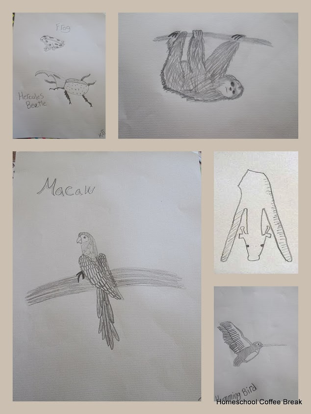 geography through art animal sketches