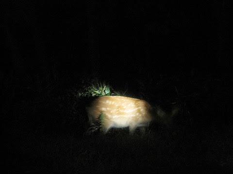 斜里バス「夜の大自然号」 車窓 その2