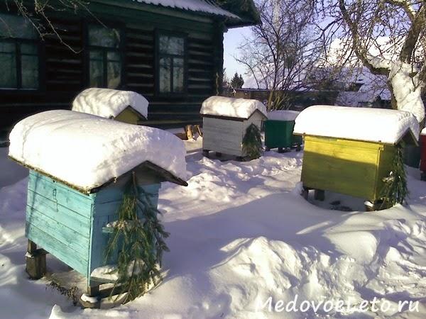 Зимой на пасеке Медовое Лето