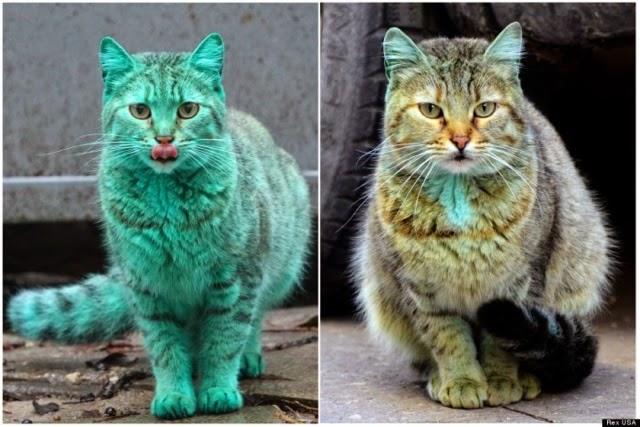 Misteri Kucing Hijau Kembali Kepada Warna Asal
