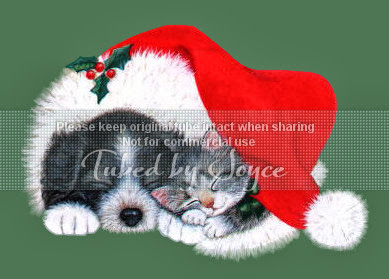 A_Nap_in_Santa's_Hat_JG.jpg