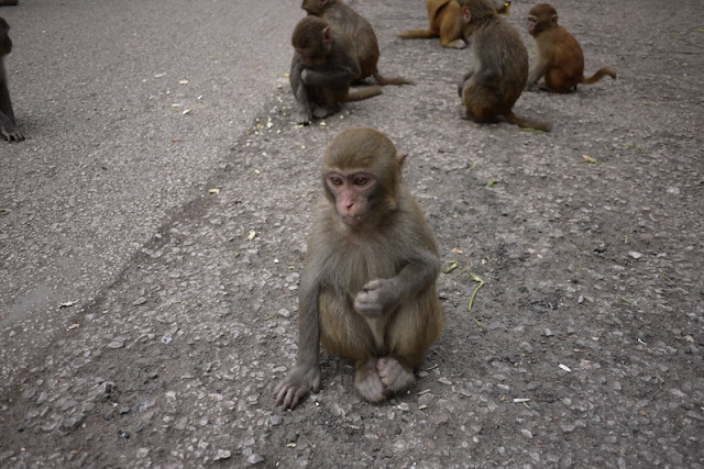 monkey kid sitting on ground