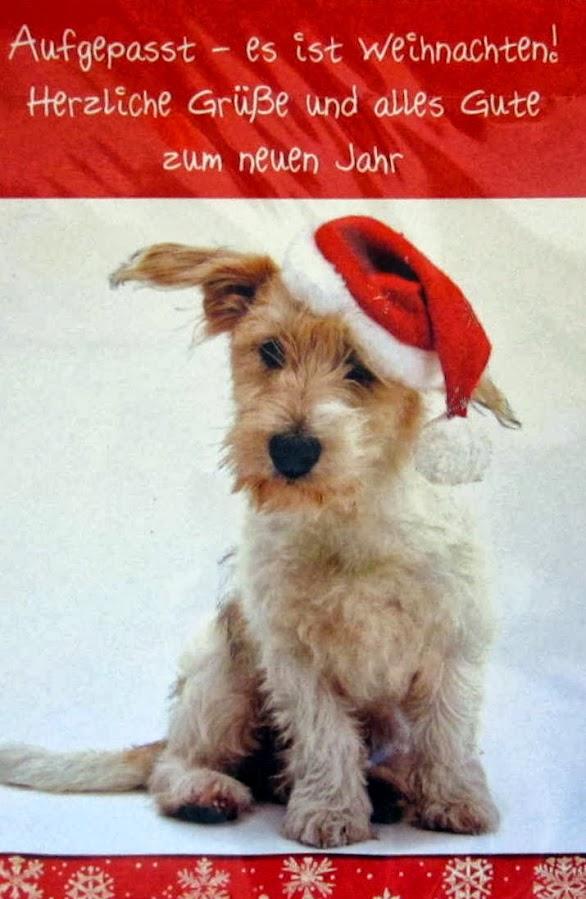 15 weihnachtskarten weihnachtskarte postkarten gl ckwunschkarten hund