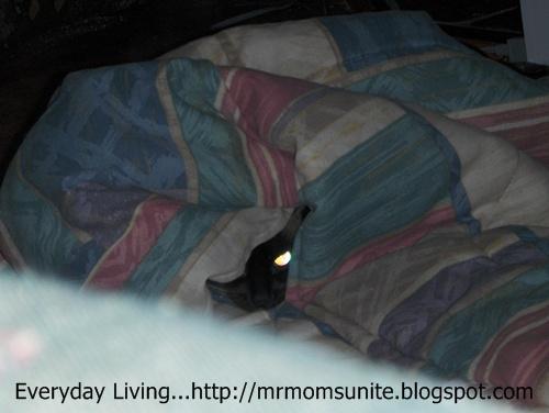 photo of yum yum's eye under a blanket