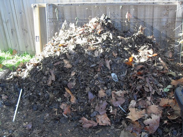 A layer of leaves over the coffee compost protects from rain and wind