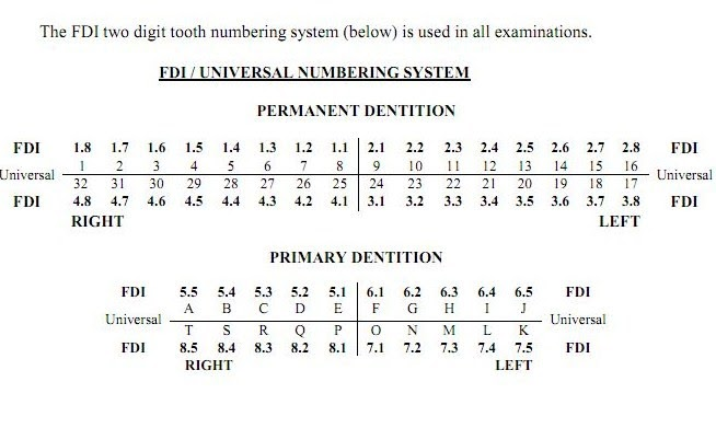 Ndeb Of Canada Tooth Numbering System Used In Exam
