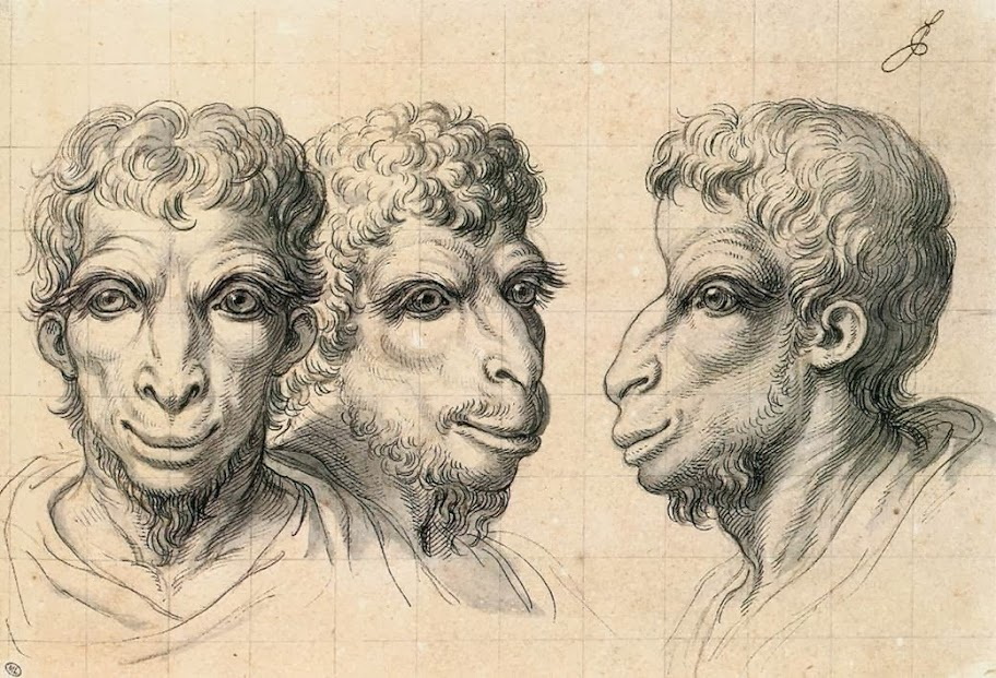Charles Le Brun - Physiognomic Heads Inspired by a Camel