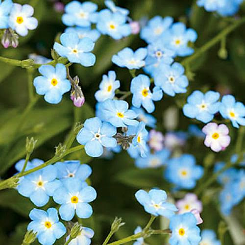 Motivational Monday Forget Me Not