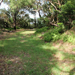 Track beside NPWS Workshop (252590)