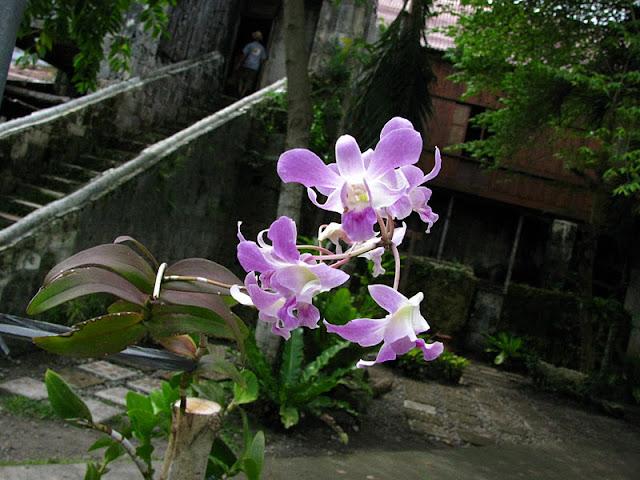 Из зимы в лето. Филиппины 2011 - Страница 2 IMG_0024%252520%2525282%252529